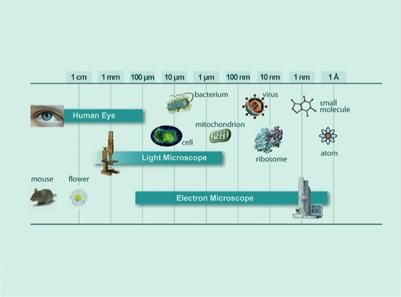 Grenzenlos scharf: Lichtmikroskopie im 21. Jahrhundert